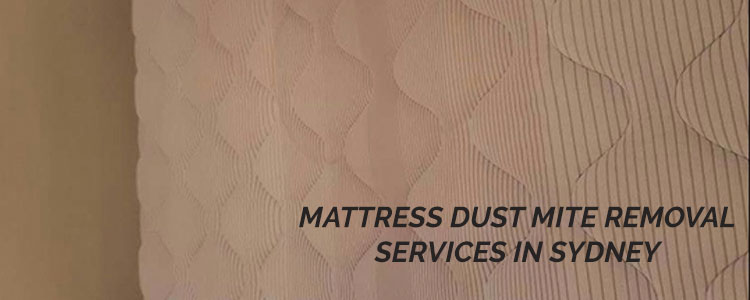 Mattress Dust Mite Removal in Denistone