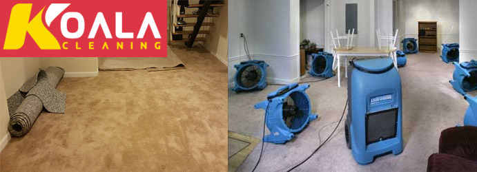 Carpet Flood Water Damage Bell