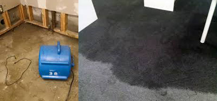 Carpet Flood Water Damage Restoration Botany