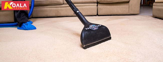 Carpet Sanitizing Service