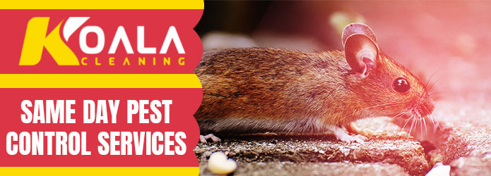 Same Day Pest Control Services Harrisdale